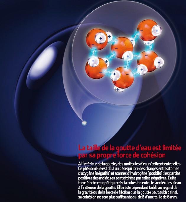 La taille de la goutte d'eau est limitée par sa propre force de cohésion. A l'intérieur de la goutte, des molécules d'eau s'attirent entre elles, créant la force de cohésion de la goutte d'eau. Mais cette force est plus faible que la gravité ou la friction que la goutte peut subir : sa cohésion ne sera plus suffisante à la maintenir unie au-delà d'une taille de 6 mm. / Image : S&V