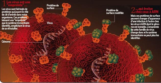 """1) Les virus sont hérissés de protéines qui jouent le rôle de clé d'entrée dans notre organisme. Elles laissent une """"empreinte"""" que le système immunitaire identifie, empêchant le virus de se réinstaller. 2) Mais ces protéines de surface peuvent changer d'apparence d'une infection à l'autre chez les virus à ARN, dont le génome est instable. Le système immunitaire ne peut donc plus les identifier. / Infographie : S&V"""