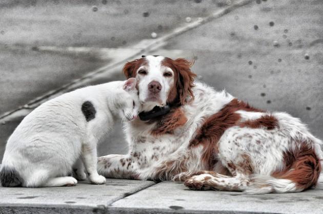 Les animaux comme les chats et les chiens bénéficieront d'un statut juridique leur reconnaissant leur sensibilité.