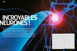 S&V 1141 neurones