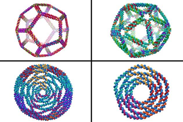 Les formes tridimensionnelles d'une molécule d'ADN dont la séquence a été conçue en laboratoire ont été prédites grâce à un nouveau modèle élaboré à l'MIT. / Ph. Nature Communications - CC BY NC ND 3.0