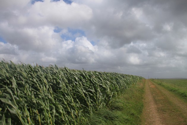 Le vent qui précède la pluie est engendré par le phénomène d'évaporation-condensation (Ph. Jeanne Menj via Flickr CC BY 2.0)
