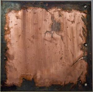 """""""L'adhésion"""" de la sève aux vaisseaux du bois crée une force qui tire, sous l'effet de leur cohésion, les molécules d'eau vers le haut (Ph. Mike Jennings via Flickr CC BY 2.0)"""
