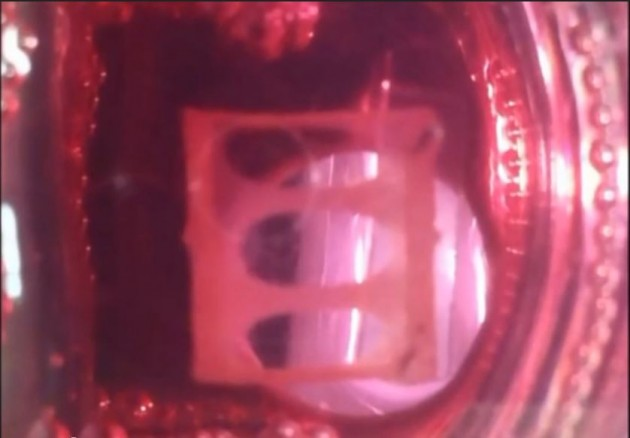 Le muscle humain artificiel filmé en train de se contracter (capture d'écran, Duke University)
