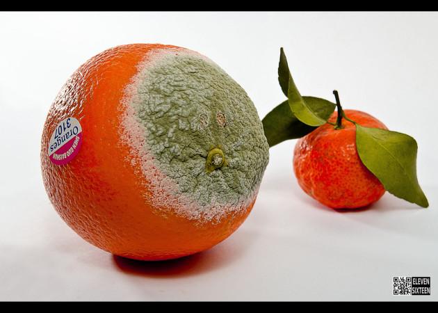 Un fruit trop mûr fait mûrir les autres (Ph. 11x16 Design Studio via Flickr CC BY 2.0)