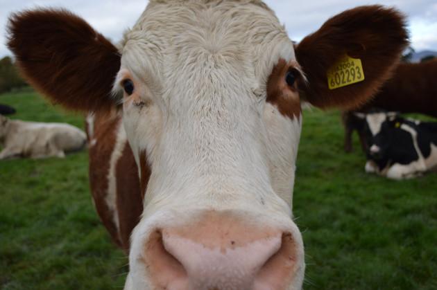 La filière de la viande est une grande productrice de pollution (Ph. @debjam via Flickr CC BY 2.0)