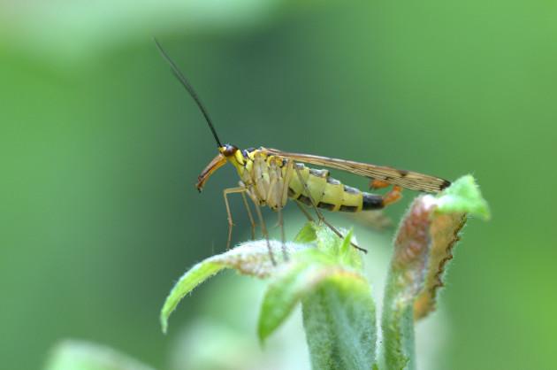 D'où est sortie la branche des insectes dans le règne animal ? (Ph. Jean-Daniel Echenard via Flickr CC BY 2.0)