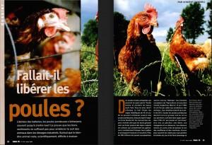 S&V 1014 poules