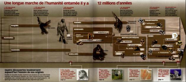 Le dernier ancêtre commun entre chimpanzés et hommes a vécu il y a environ 8 millions d'années. - © S&V n°1113.