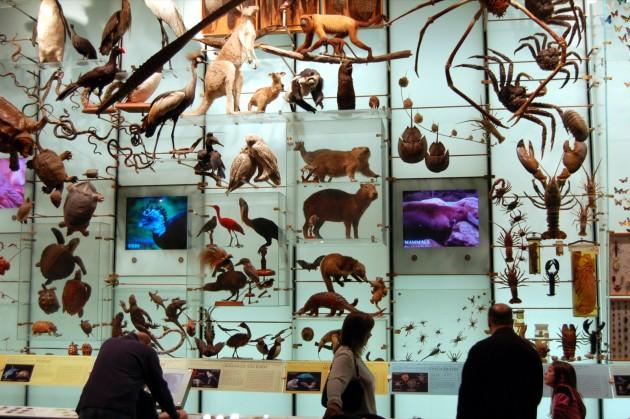 A l'heure où les espèces disparaissent à grands pas, pour cause d'activités humaines, la préservation de la biodiversité est devenue une priorité (Ph. Dan McKay via Flickr CC BY 2.0).
