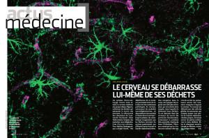 S&V 1141 - cerveau dechets