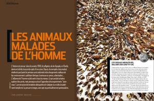 S&V 1149 - animaux disparition