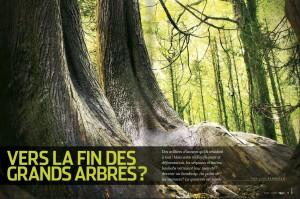 S&V 1151 - grands arbres