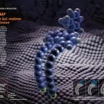 Un moteur moléculaire
