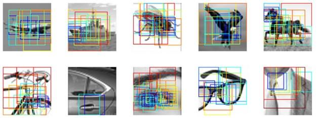 Pour chaque objet, les chercheurs ont effectué des dizaines de zoom (et de floutages) différents (Shimon Ullman et al., PNAS 2016).