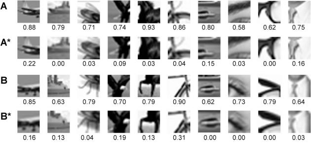 Les lignes A et B représentent les mêmes objets avec des niveau de zoome et de flou qui se situent à la limite du reconnaissable par les humains (ou configurations minimales reconnaissables). Les lignes A* et B* représentent ces mêmes images mais juste en-dessous de la limite (il faut les regarder un par un pour constater le phénomène). Les chiffres sous les images représentent les taux de reconnaissance obtenus (statistiquement). On constate la forte chute de ce taux entre les lignes A et A* (B et B*).