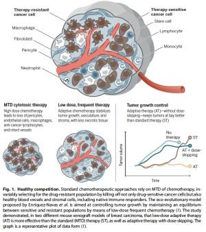 La thérapie adaptative maintient sous contrôle les tumeurs sans éliminer les cellules tumorales sensibles à la chimiothérapie - Crédits : Klement et al., Science Translational Medicine (2016).