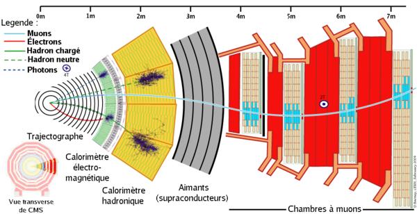 Vue transverse du détecteur CMS (crédit : Cern)