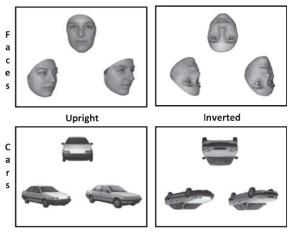 Les quatre types d'images présentés aux personnes testées (M.M Lavallée et al., Journal of Alzheimer's Disease 2016).