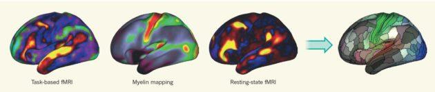 Les trois techniques d'analyse IRM qui ont permis de découvrir les nouvelles aires : IRMf lors de tâches cognitives, la carte de la myéline, IRMf sur le cerveau au repos (Glasser et al, Nature 2016).