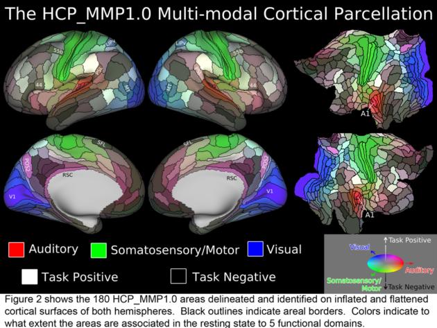 Les 360 aires mis en lumière par l'étude. En rouge, les aires liées au système auditif ; en bleu, celles liées au système visuel ; en vert, celles du système somatosensoriel/moteur. Par ailleurs, les zones claires sont celles liées à des fonctions ((Glasser et al, Nature 2016).