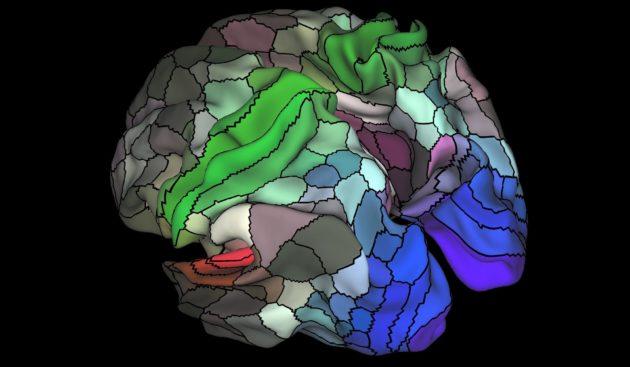 Tel est le nouveau paysage cérébrale révélé par l'étude (Glasser et al, Nature 2016).