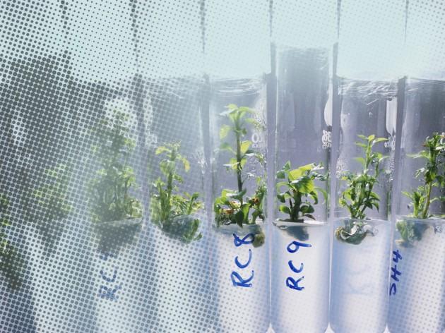 Les Grandes Archives de S&V : les OGM